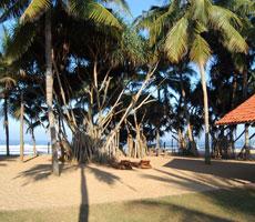 Hibiscus Beach viesnīca (Colombo, Šrilanka)